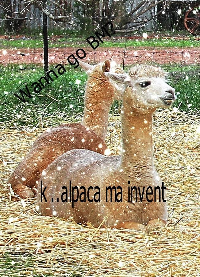Alpacas Digital Art - Beast Master Meme by Lethal Lulu