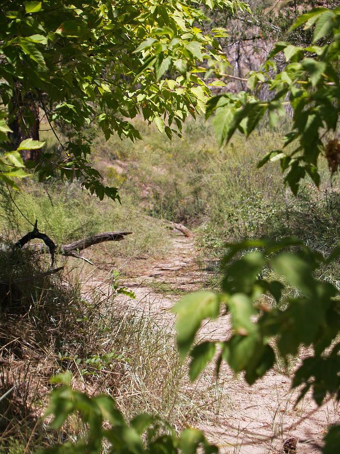 Landscape Photograph - Beaten Path by James Granberry