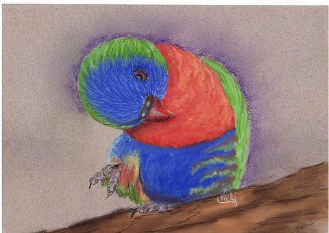 Beau the lorikeet. Pastel by Vicki Thompson