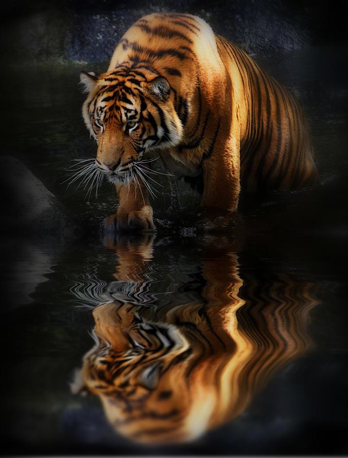 Beautiful Animal Photograph By Kym Clarke