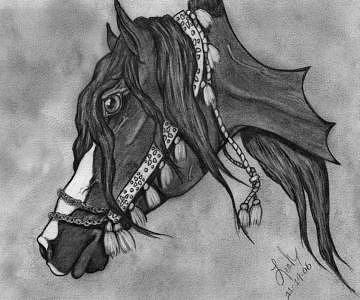 Bedouin Drawing - Beautiful Bedouin by Leah Jaarveth
