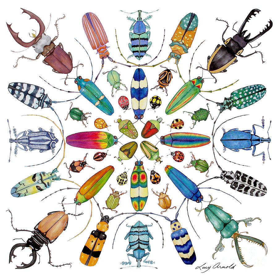 Insects Painting - Beautiful Beetles by Lucy Arnold
