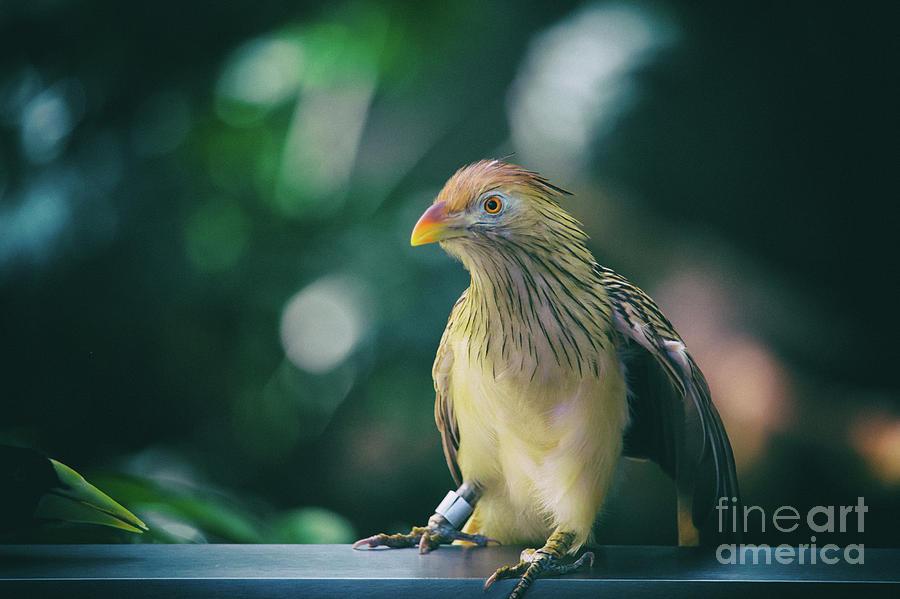 Beautiful Birds Collection Photograph