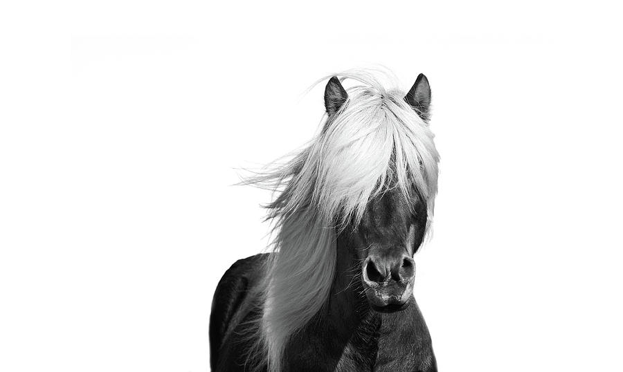 Horse photograph beautiful black and white horse art prints by wall art prints