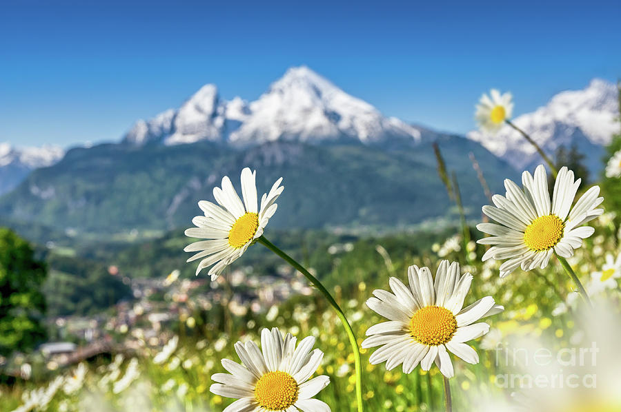 Alpen Photograph - Beautiful Blooming Flower Panorama by JR Photography
