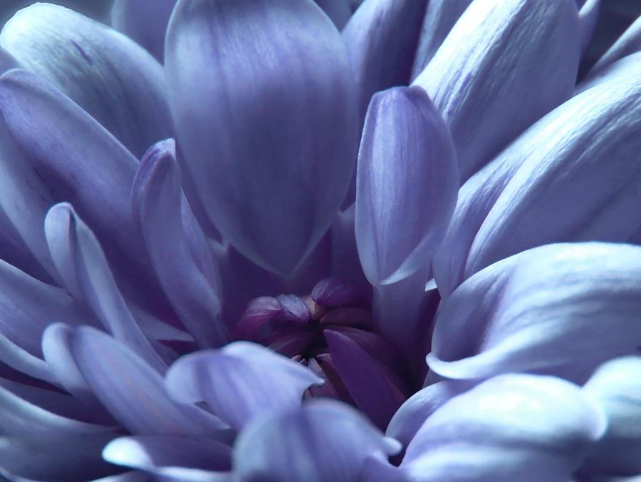 Blue Photograph - Beautiful Blue by Johanna Hurmerinta