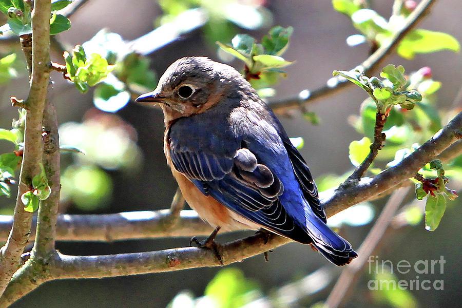 Bird Photograph - Beautiful Blue by Marle Nopardi