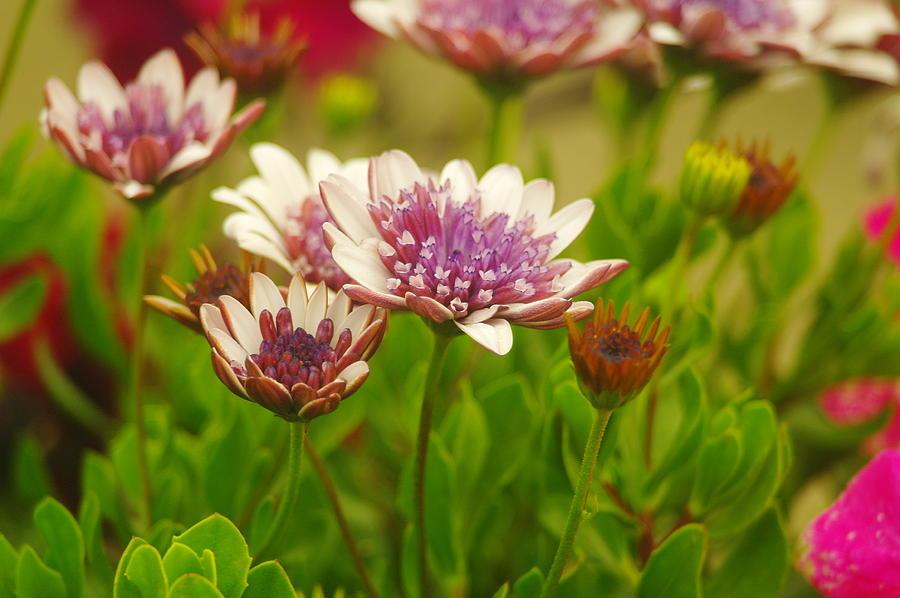 Beautiful Boquet Photograph