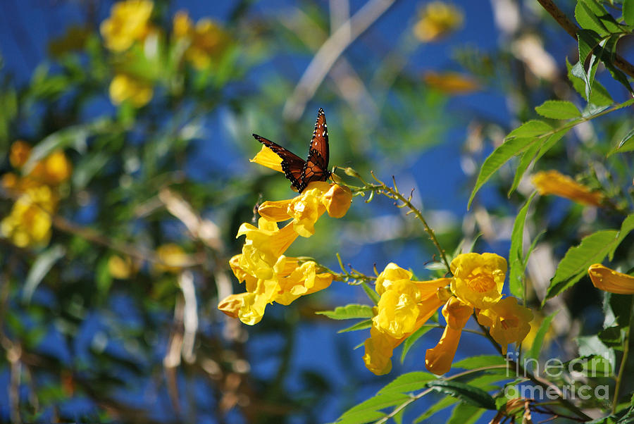 Butterfly Photograph - Beautiful Butterfly by Donna Greene