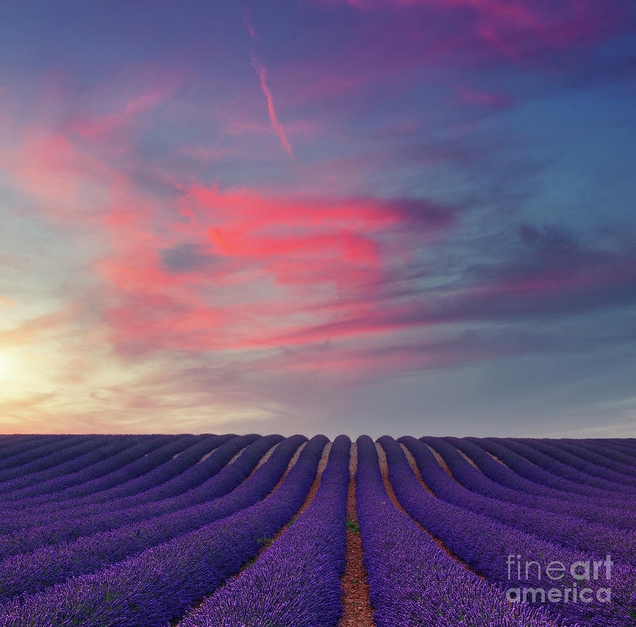 Beautiful Colors Purple Lavender Fields At Sunset Near Valensole Photograph By Roland Barat