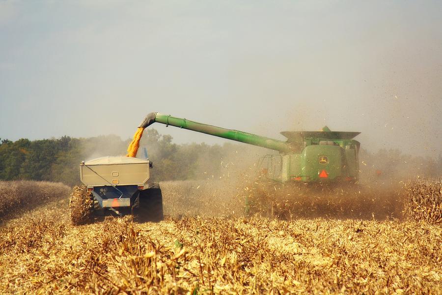 Corn Harvest Photograph - Beautiful Corn Harvest by Goldie Pierce