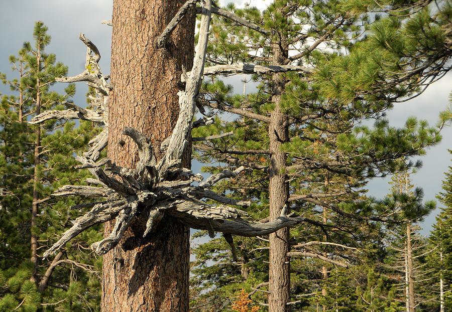 Tree Photograph - Beautiful Deformity by Donna Blackhall