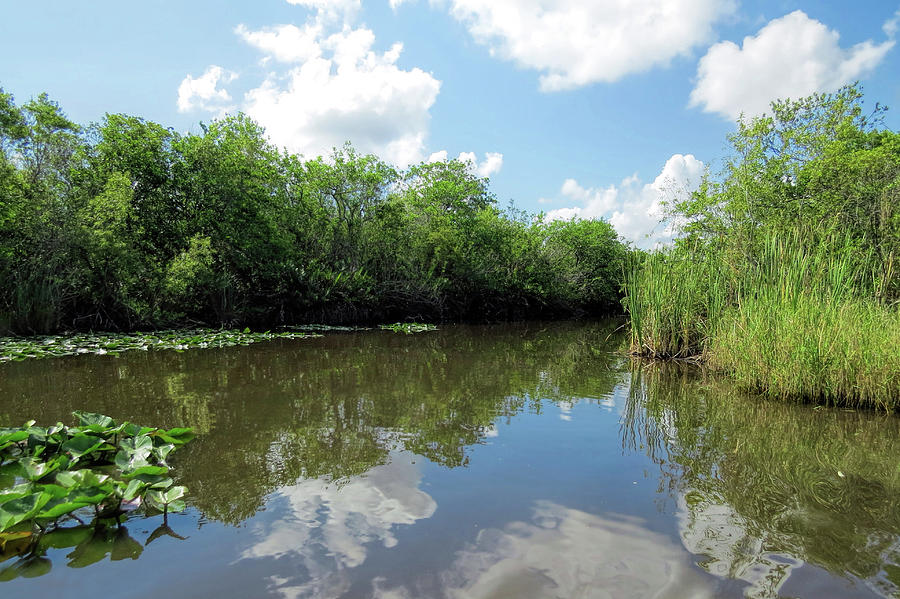 Beautiful Everglades by A H Kuusela