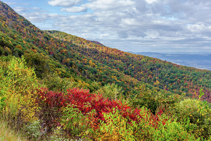 Beautiful Fall Foliage in the Blue Ridge Mountains by Lori Coleman