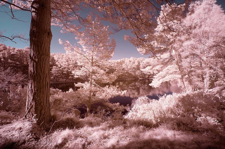 Beautiful False Color Surreal Infrared Landscape Image Of Lake A Photograph