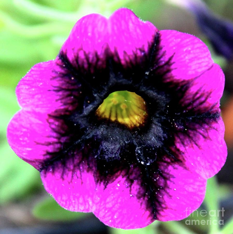Flower Photograph - Beautiful Flower by Annette Allman