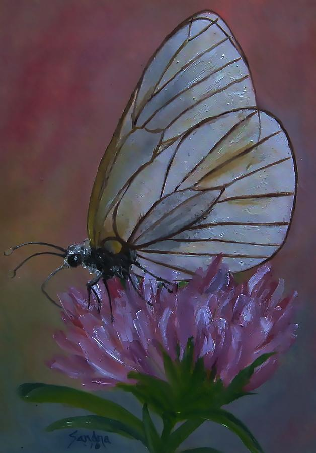 Beautiful Glasswing Butterfly by Sandra Maddox