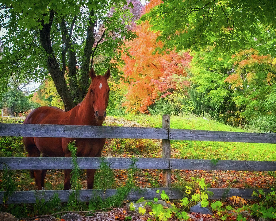 Beautiful Horse in Fall Foliage by John Vose