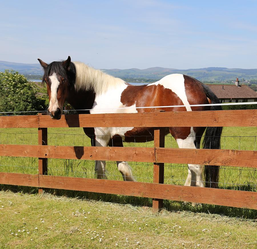 Horse Photograph - Beautiful Horse in Kinneswood by Caroline Reyes-Loughrey