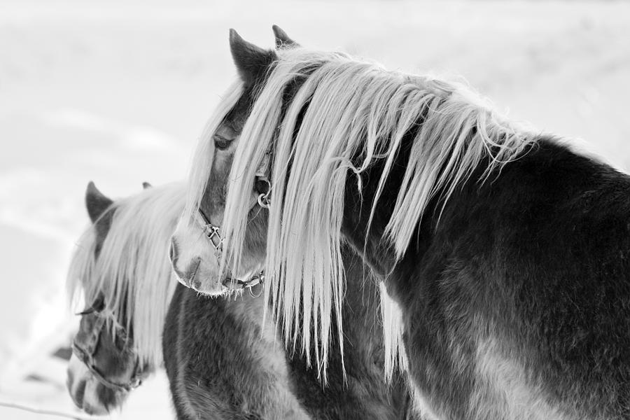 Black & White Photograph - Beautiful Horse by Martin Rochefort