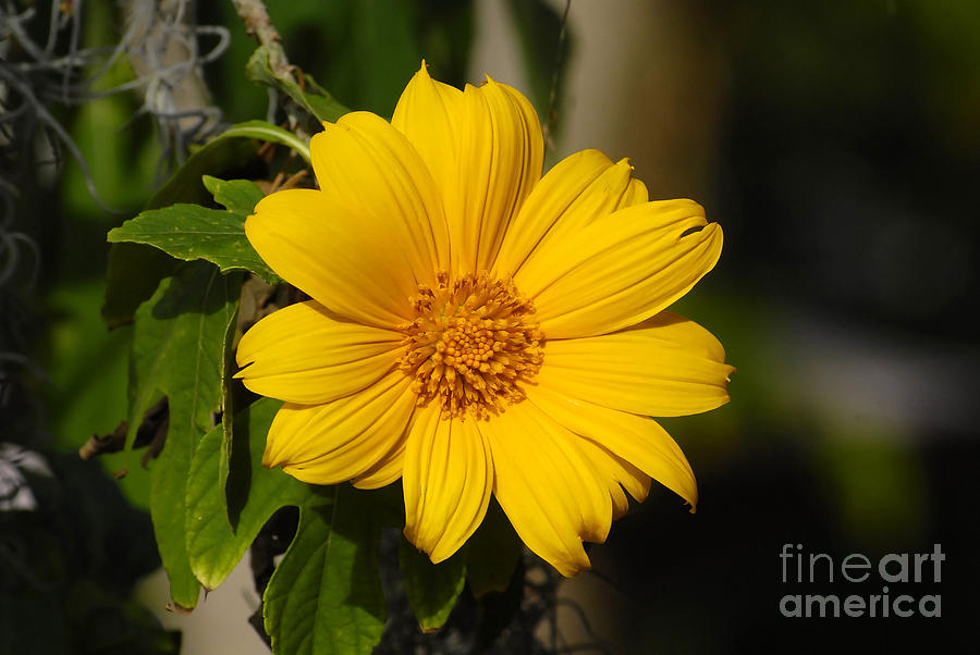 Yellow Photograph - Beautiful In Yellow by David Lee Thompson