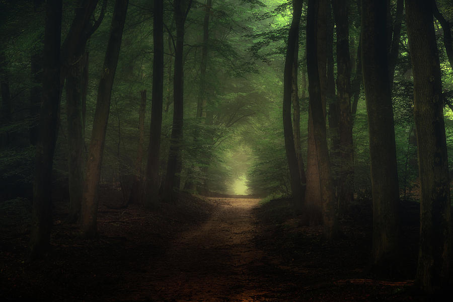 Beautiful Morning In Speulderbos Forest Photograph