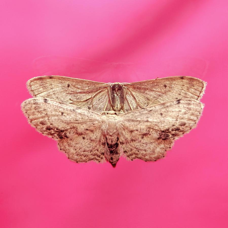 Beautiful Moth Wings Reflection by Tracie Kaska