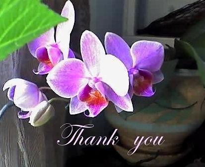 этом сообщает спасибо открытки орхидеи нет уже придумываю
