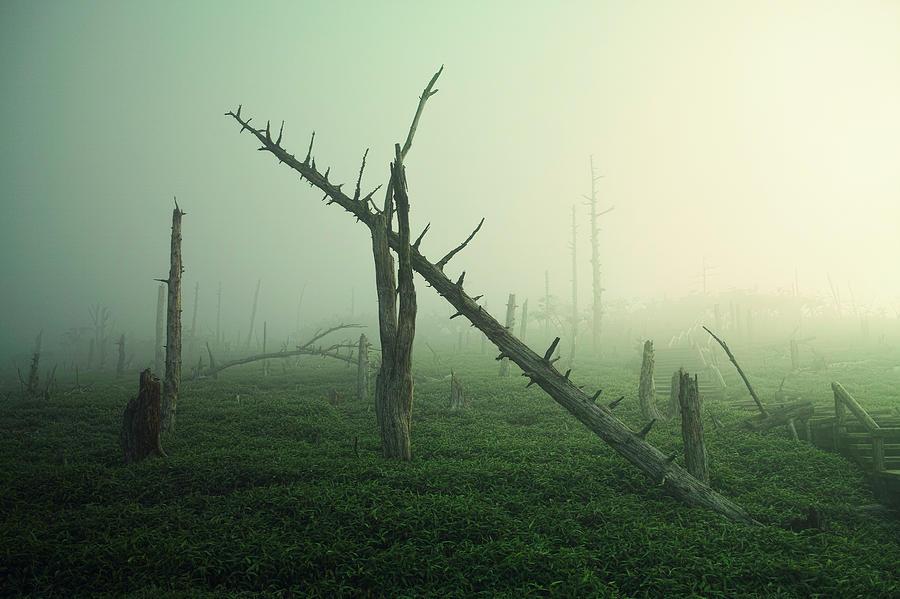 Landscape Photograph - Beautiful Rot by Koji Sugimoto