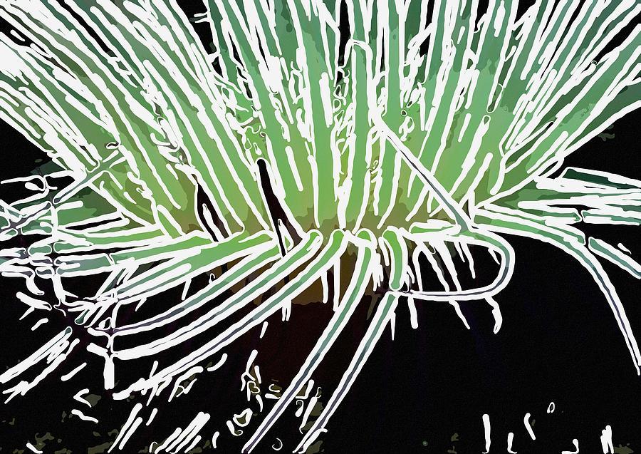 Starfish Painting - Beautiful Sea Anemone 3 by Lanjee Chee