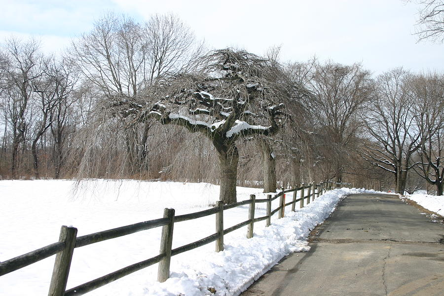 Landscape Photograph - Beautiful Snow Setting by Dennis Curry