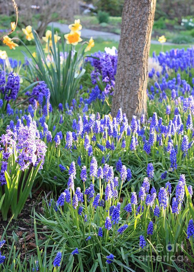 Spring Garden Photograph - Beautiful Spring Day by Carol Groenen