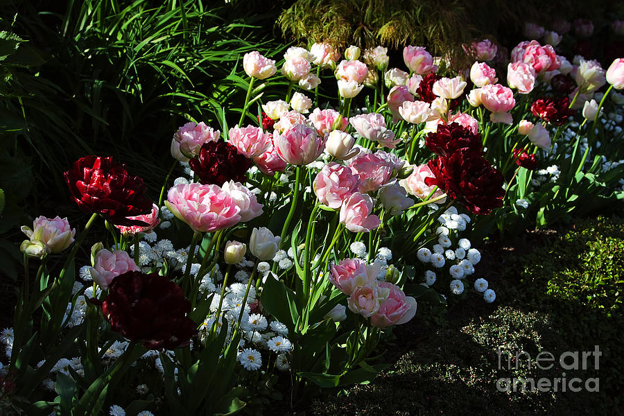 Flowers Photograph - Beautiful Spring Flowers by Louise Heusinkveld