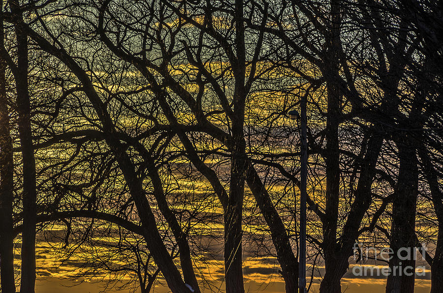 Beautiful Sunset Behind Bare Trees by Sue Smith