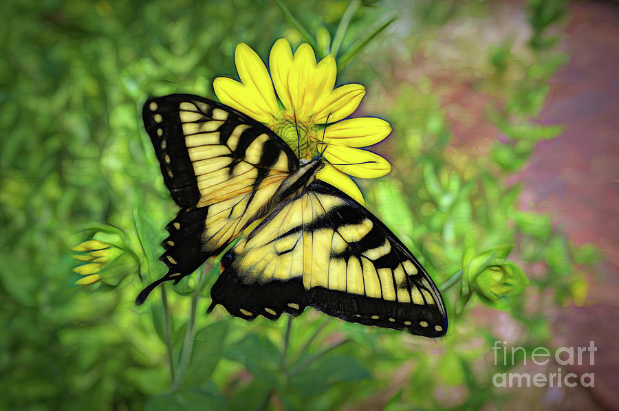 Beautiful Swallowtail Butterfly by Sue Melvin