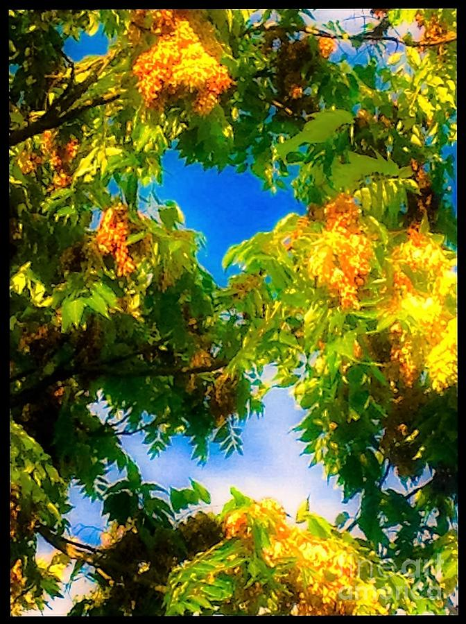 Sky Photograph - Beautiful Tree Tops In Sky by Debra Lynch
