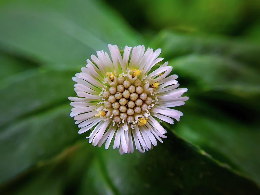 Flower Photograph - Beautiful White Flower by Argie Dante