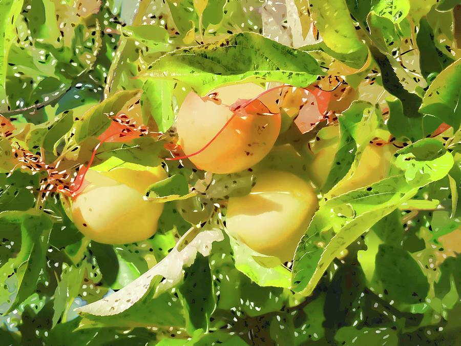 Tree Painting - Beautiful Yellow Apple by Jeelan Clark