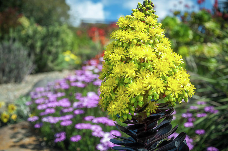 Australia Photograph - Beautiful Yellow Flowers On A Garden Background by Daniela Constantinescu