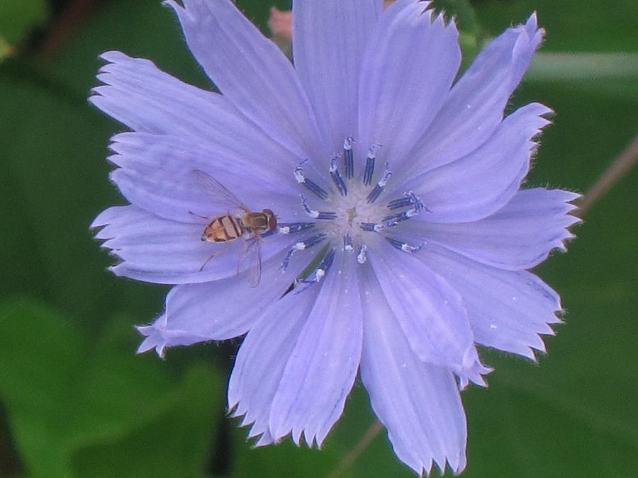 Bee Photograph - Beauty And The Bee by Marjorie Tietjen