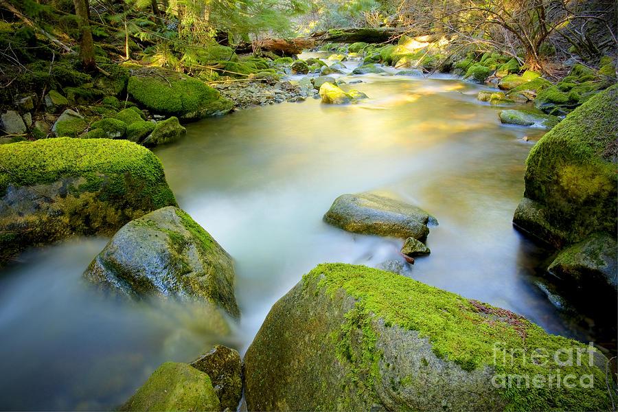 Creek Photograph - Beauty Creek by Idaho Scenic Images Linda Lantzy