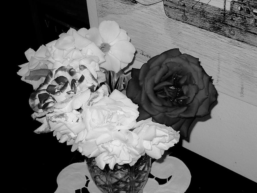 ..beauty In Black And White.... Photograph by Adolfo hector Penas alvarado
