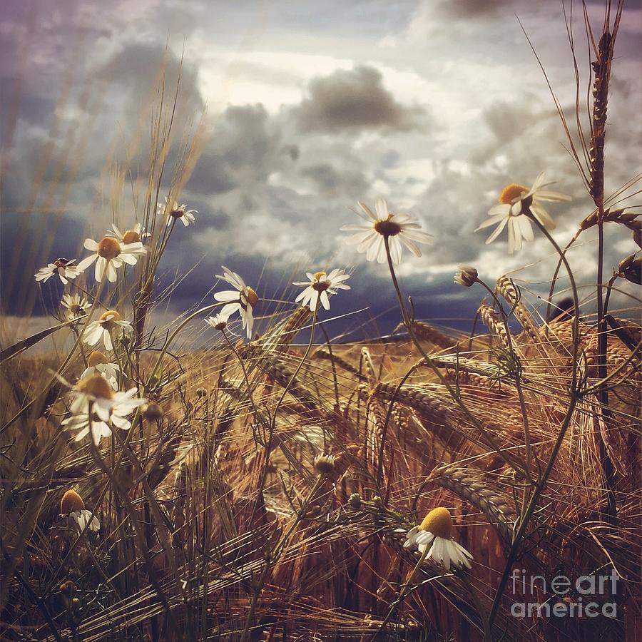 Flowers Photograph - Beauty In Chaos by Mariko Klug