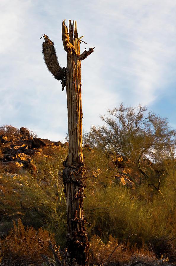 Southwest Photograph - Beauty In The Breakdown by Amy Sorvillo