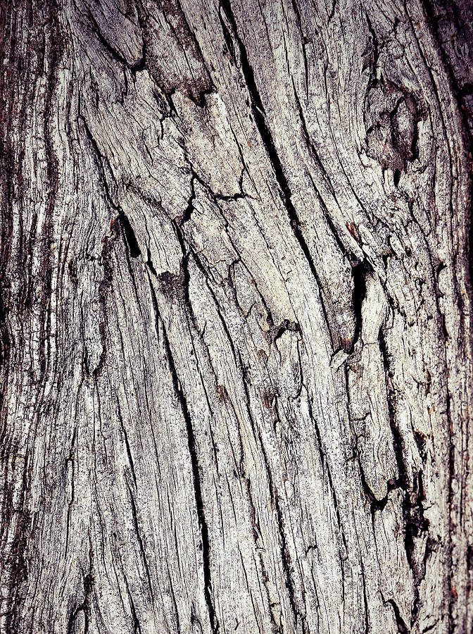 Background Photograph - Beauty In The Cracks Of Old Wood by Jozef Jankola