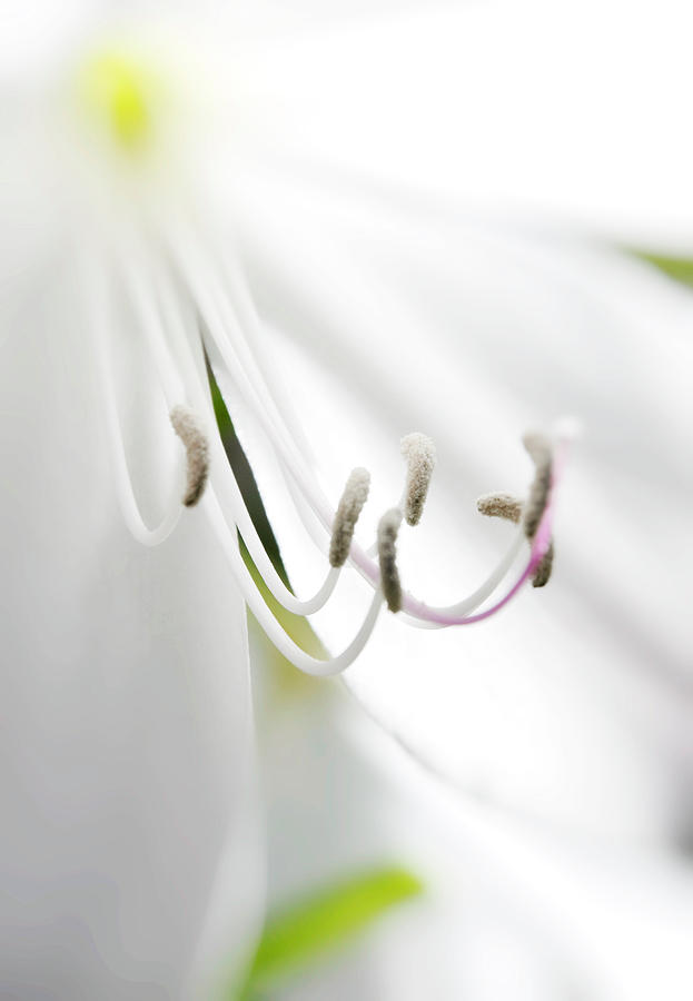 Lily Photograph - Beauty In Things Exist In The Mind Which Contemplates Them. by Mark Denham