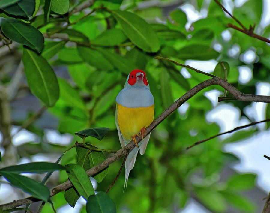 Bird Photograph - Beauty by Johanne Daniel