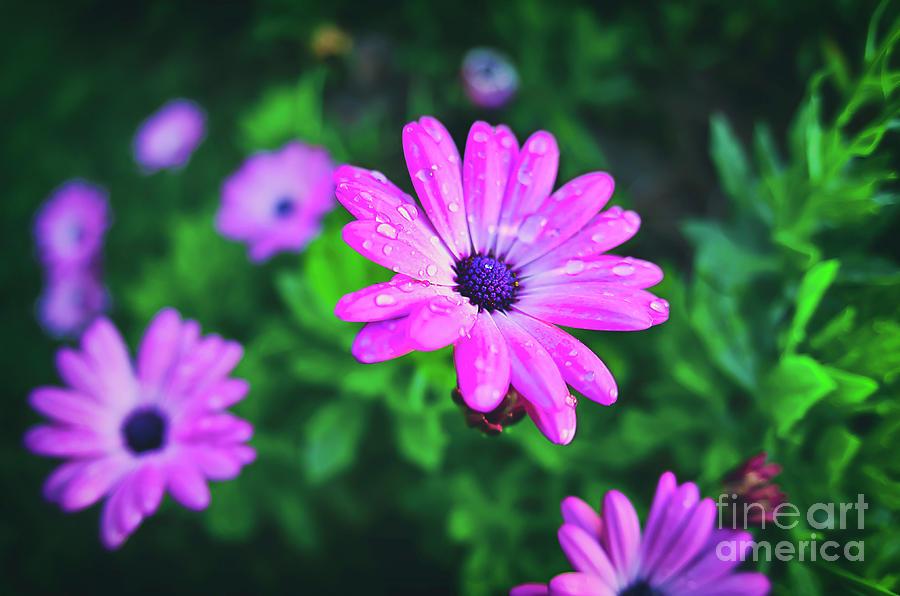 Beauty Photograph - Beauty nature by Alessandro Giorgi Art Photography