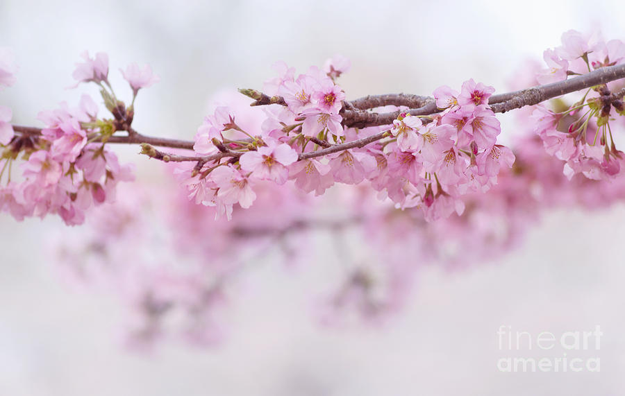 Beauty of blossom by Rima Biswas