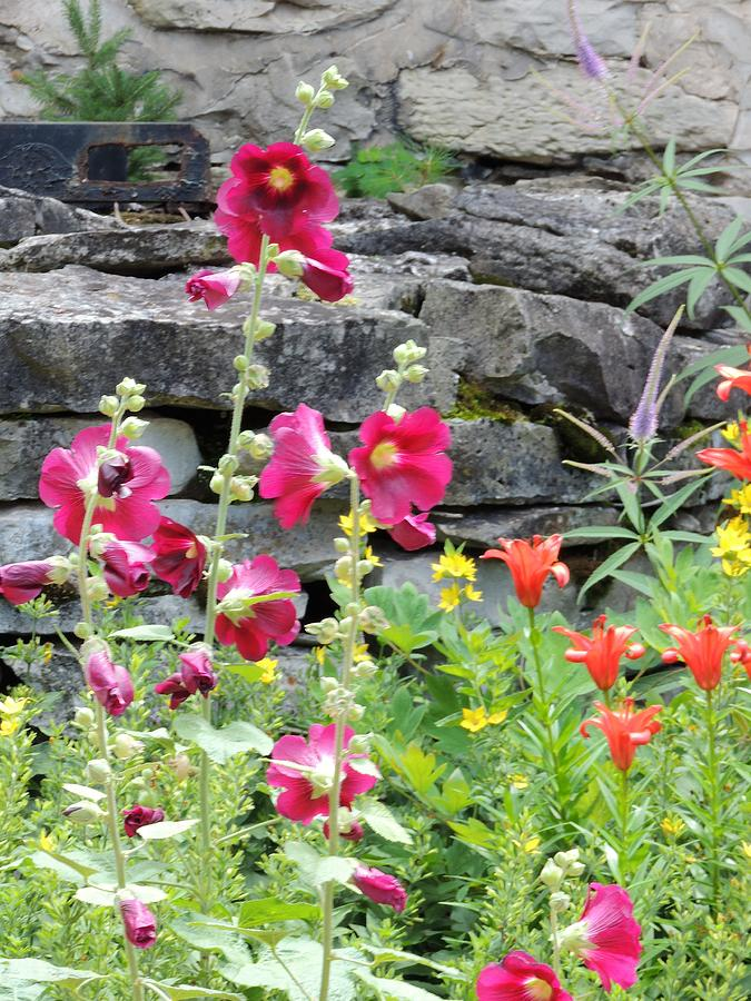 Beauty Of Summer Flowers Photograph